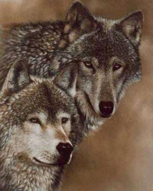 Фото тату для пар волки - 1