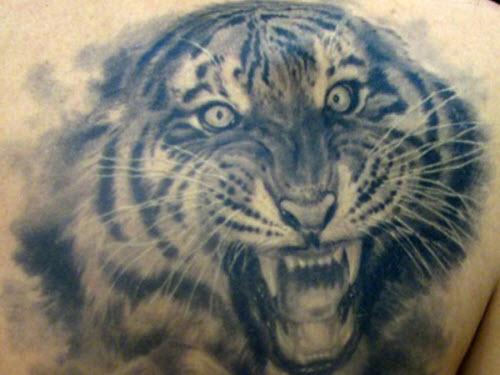 Фото тату с тигром на спине - 0
