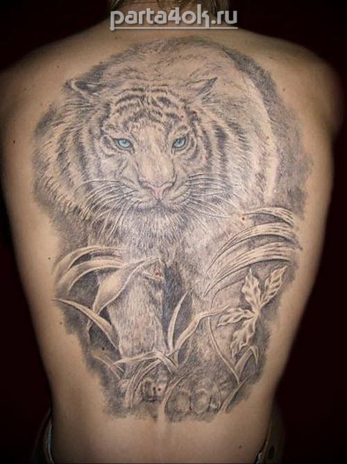 Фото тату с тигром на спине - 2