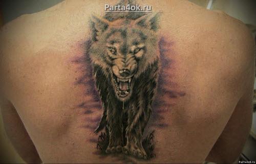 Фото тату волка на спине мужские