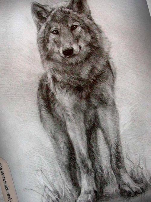 Фото волка в лесу для тату - 7