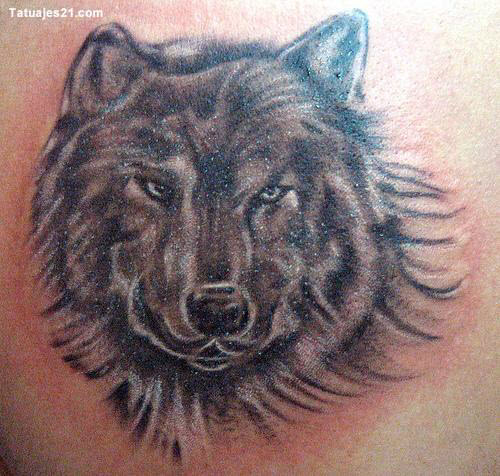 Фото волка в лесу для тату - 9
