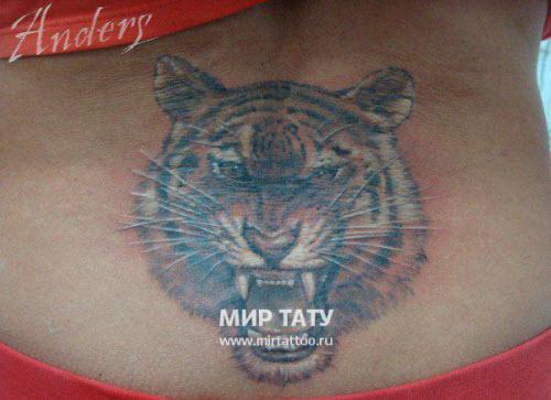 Тату тигр на пояснице фото - 9