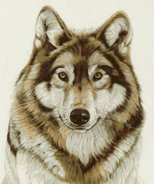 Тату волка на голове фото - 6