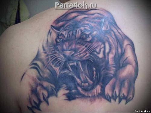 Тигр на ключице тату фото - 8